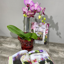 Local Orchid Package