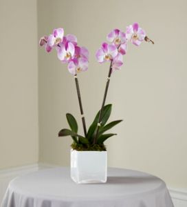 The Pink Orchid Planter
