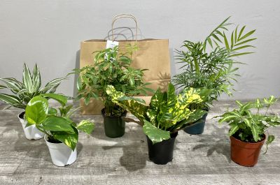 Six Pack of Indoor House Plants